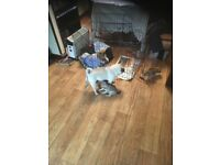 Pug cross pups for sale