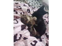 2 kittens are looking a new home.