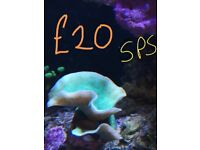 Tank shut down all corals/stock for sale