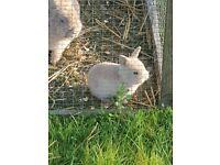Beautiful baby girl bunny