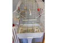 Young budgies for sale and cage £25