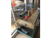 2 x baby male rats and cage and accessories