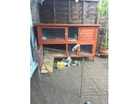 Female rabbit 6 months old with hutch and accesories