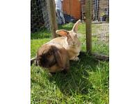 A beautiful pair of rabbit looking for a loving home.