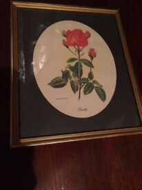 Framed print of rose, measures 28cm by 33 cm