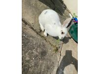 2 bunnies for sale; 5 months old; boy and girl