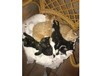 Beautiful Playful Kittens For Sale