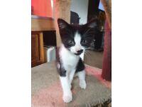 Stunning kittens for sale £400 each