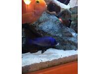 Fish (mdoka white lips)
