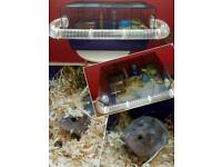 1 female russian dwarf hamster with cage