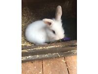 Mixed Breed Rabbits for sale 🐰