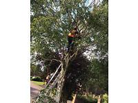 TREE SERVICES & GARDEN MAINTENANCE