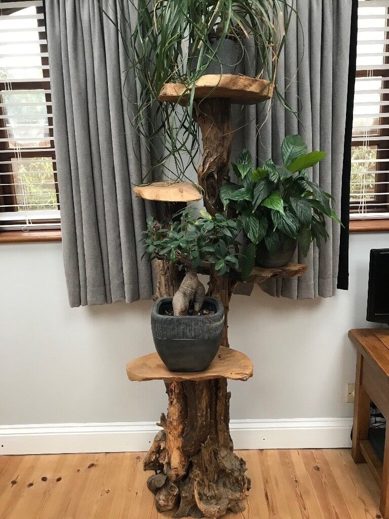 Exhibition Stand Gumtree : Solid wooden coffee root tier display stand plant