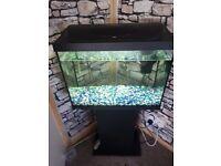 Fish tank 80L