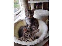 2 adorable female kittens