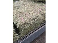 Horse hay top quality for sale