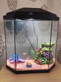 Fish tank with two fish and accessories.