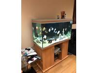 4ft 350l Rena aquarium