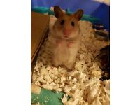 Baby hamster.. will be ready to leave mum soon.