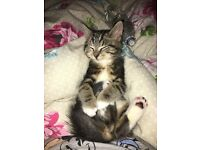 Cat up for rehoming