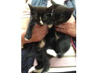 5 playful black and white kittens