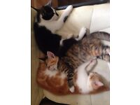 Three sweet kittens for sale