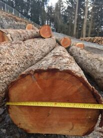 Douglas Fir Waney Edge Live Cladding & Structural Timber **MANY SIZES AVAILABLE**