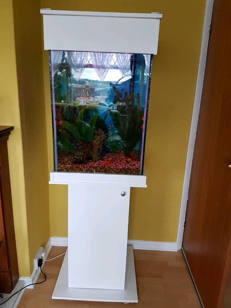 tall fish tank in ilkeston derbyshire gumtree