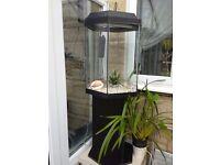 Attractive hexagonal glass Fish Tank / Aquarium