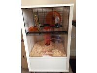 Omlet hamster cage, suitable for Syrain Hamsters and Gerbils. Lovely cage, easy to clean!!!