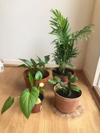 Four indoor plants