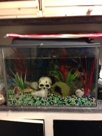 Fish Tank + Accesories £10