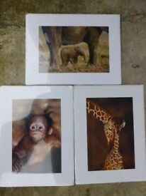 3 x sealed animal prints