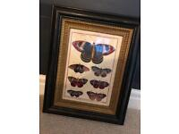Large decorative butterfly illustration