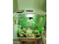 Biorb 30L Fish Tank with Fish