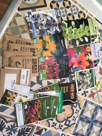 £5 only - Flower seeds, unopened packets - job lot
