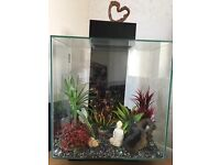 Fluval Edge fish tank 46L without filter and pump, good condition with new fish tank accessories