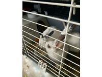 🔥✅Sale 🔥✅ 3 🐇🐇🐇 bunnies are sold with the cage