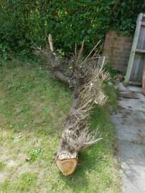 Free fire wood logs/timber