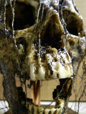 HALLOWEEN HORROR MOVIE PROP - Realistic Resin Human Corpse Head