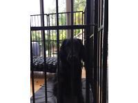 2m x 2m metal bar dog run