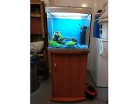large Fish tank with cabinet and lots of accessories