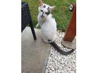 Cat female