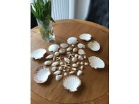 Wedding Decorations - Shells, household: various sizes 40+