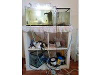 3 x fish tanks and cabinet with all equipment