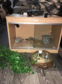 2ft Reptile Vivarium (full setup)