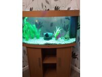 Juwel Vision 180 Beech Aquarium and cabinet (without heater)