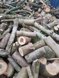 Unprocessed hardwood logs, cordwood, firewood
