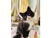 Looks like Persian Kittens