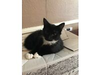 2 adorable males for rehoming